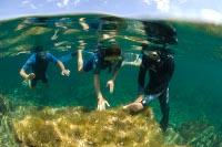 Un milieu sous les mers