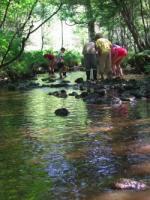 La Mosson : au milieu coule une rivière