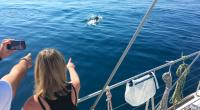 Navigations observation et étude de la vie marine et du Grand Dauphin du golfe du Lion - programme journée ou 5h